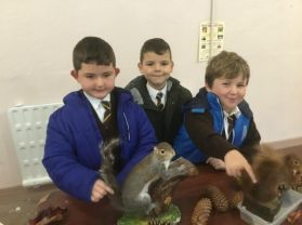 P3 Squirrel Hunt in Tollymore